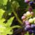 Profile picture of grapevines